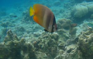 菲律宾娱乐-巴里卡萨岛浮潜