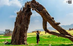 【怀来图片】『灿如夏花 燃烧沙漠』——豆&芽 天漠の旅