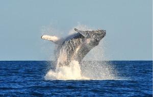 【非洲图片】梦想实现的地方---马达加斯加(第二季--观鲸之旅)