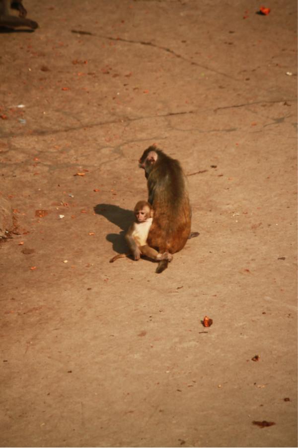 北京八达岭野生动物园——猴山的精灵及温顺动物篇