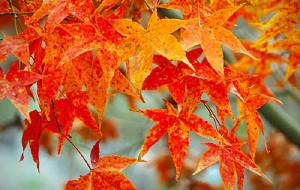 【南投图片】秋色奧萬大。雲飛深處