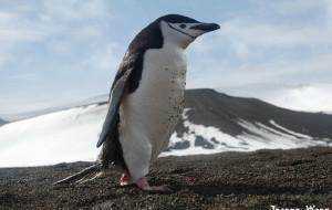 【南极洲图片】南极,好像总和梦想相关