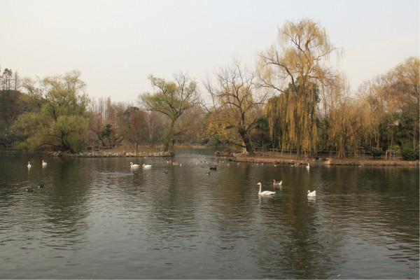 上海的西郊有个上海动物园,动物园里有个天鹅湖