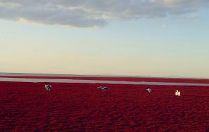 【盘锦图片】喵游记之——盘锦红海滩