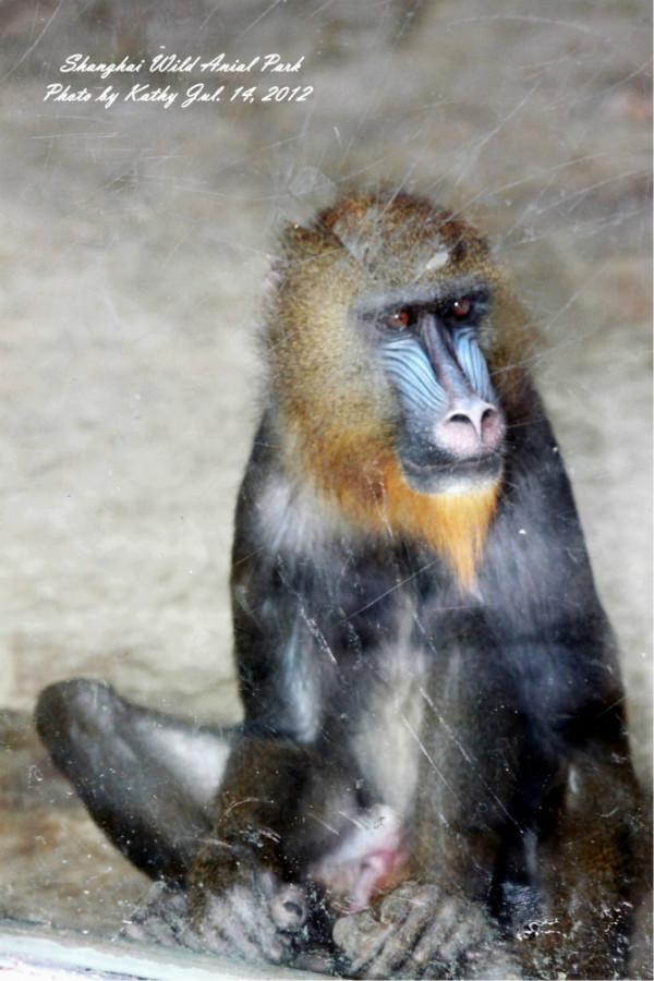 7月 我与上海野生动物园的亲蜜约会