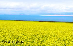 【嘉峪关图片】青海湖~敦煌之西行记