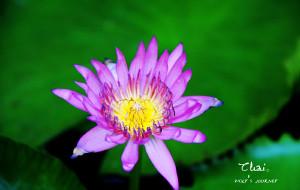 【夜丰颂图片】【宝藏纪念】【泰国】在泰的十五天。武汉,曼谷,普吉,PP岛,清迈,PAI。