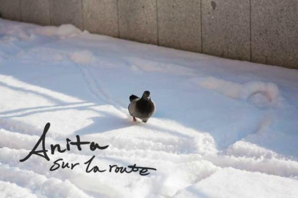 一直走   这只小鸽子一直走到我脚附近才飞走.   被雪覆盖的松树.   飘散的温泉水气.   店铺开的也不多.   游客也很少.   雪景也是非常美的.