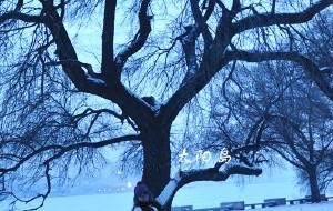 【吉林市图片】南方姑娘的北方梦。哈尔滨,雪乡,延吉,吉林,雾凇岛,长春,沈阳。完。