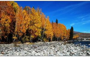 【禾木图片】又到一年金秋户外季——喀纳斯禾木徒步功略(海量图片慎入)