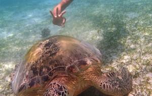 马来西亚娱乐-卡帕莱岛浮潜