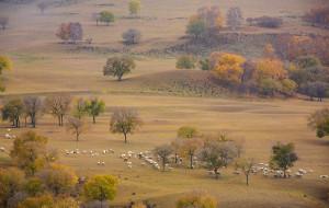 【乌兰布统图片】【坝上行摄思语】——2013坝上秋色摄影采风