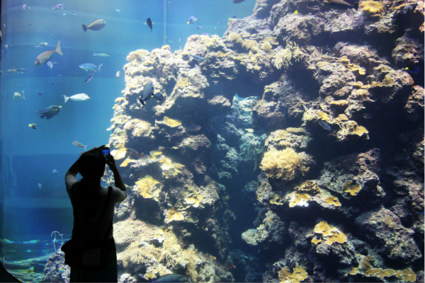 壁纸 海底 海底世界 海洋馆 水族馆 600_400