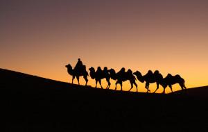 【阿拉善图片】【蜂首纪念】追逐额济纳旗的色彩之旅
