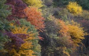 【理县图片】【川西之秋】米亚罗——毕棚沟