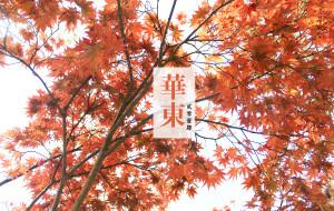 【杭州图片】一个人的春游华东(上海苏州乌镇西塘杭州)