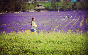【北海道图片】不负等待的紫色天堂——北海道