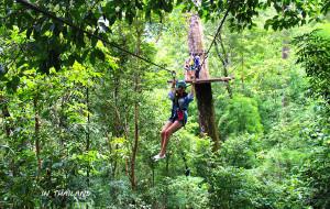 泰国娱乐-Jungle Flight