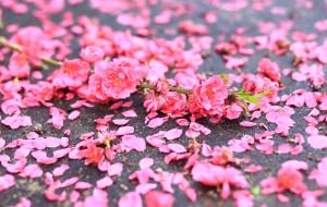 【乐昌图片】那些桃红李白的花事--行摄乐昌九峰