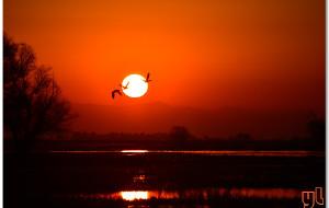 【美国西海岸图片】万鸟竞翔: 加州中央谷地的冬日奇观
