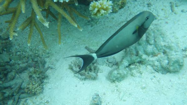 壁纸 动物 海底 海底世界 海洋馆 水族馆 鱼 鱼类 600_338