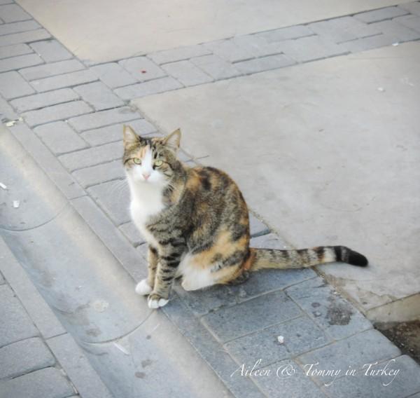一个城市的人民素质如何,只要看这个国家的小动物怕不怕人就知道了.