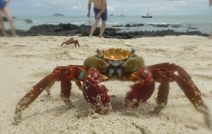 【加拉帕戈斯群岛图片】乐活——加拉帕戈斯群岛