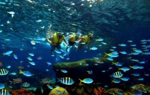 新加坡娱乐-水上探险乐园