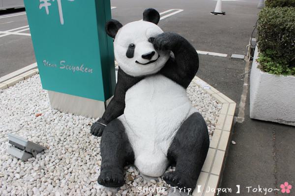 这个熊猫太可爱了吧