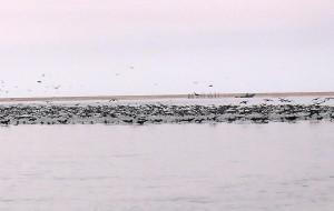 【纳米比亚图片】纳米比亚,南非游之五-------鲸湾港出海,看海豹,海豚,海鸥等