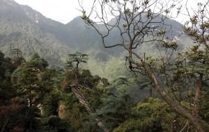 【宜章图片】呼吸大自然的新鲜空气--湖南郴州莽山高铁纯玩团(公司活动)