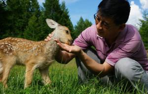 【临江图片】梦中的呼伦贝尔--2013年夏六日草原探秘