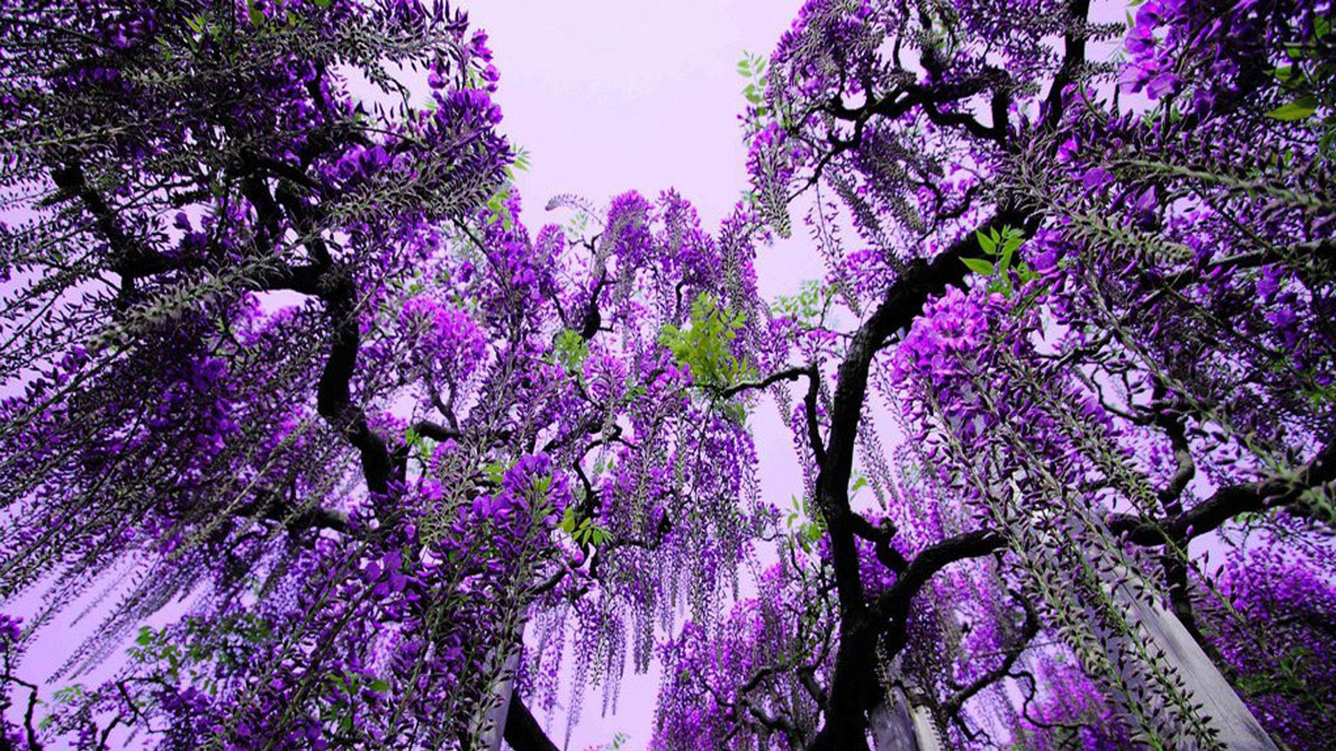 日本春季赏花去哪里,日本踏青好去处,日本春日郊游攻略