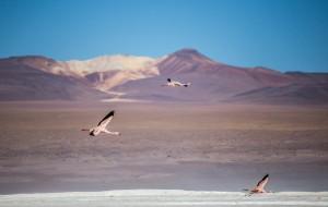 【玻利维亚图片】【玻利维亚】高原盐湖、火烈鸟......南美洲最美的风景!