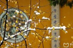 追雪绝美杭州西湖雪景,宁波慈溪鹤鸣古镇,方家河头村游记。