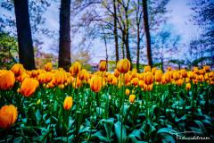 阿姆斯特丹的倦意——花的奇异四季物语