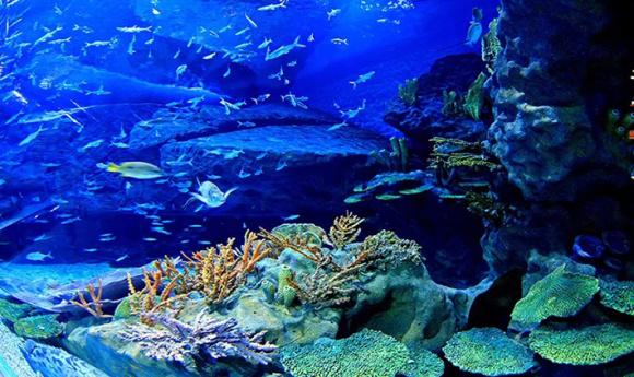 武汉海昌极地海洋世界景点门票(仿佛置身大海深处)