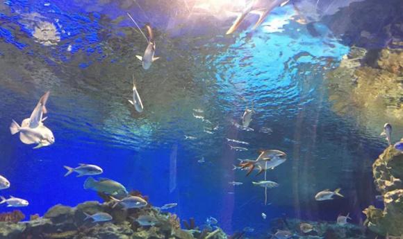 成都 海昌极地海洋世界 景点门票(4d体验)