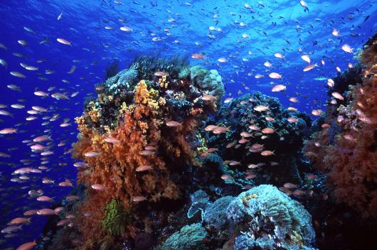 巴厘岛蓝梦岛珊瑚礁游轮一日游(半潜水艇珊瑚观景+香蕉船+35米水道
