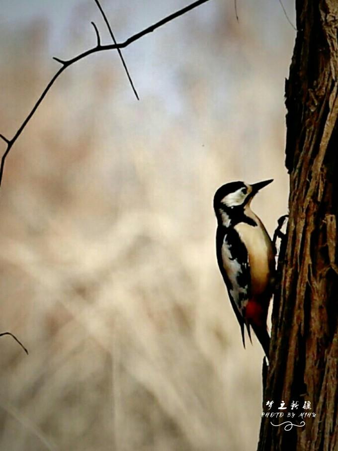 壁纸 动物 鸟 鸟类 雀 680_907 竖版 竖屏 手机
