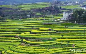 【绩溪图片】皖南去看油菜花--隐藏在大山里的花海梯田家朋
