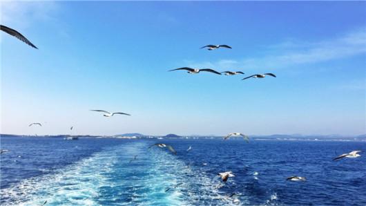 【拥抱韩国唯一的珊瑚沙海浴场,女士赠送红参面膜】城山日出峰-牛岛半