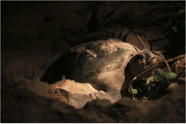 动物兄弟海龟船简笔画