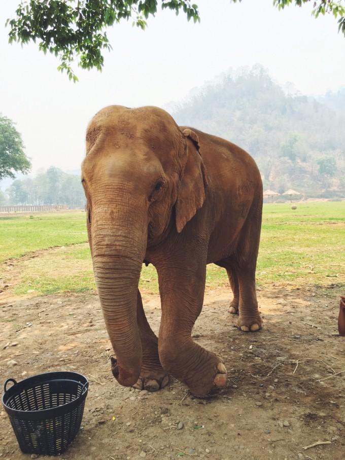 壁纸 大象 动物 680_907 竖版 竖屏 手机