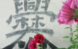 【爨底下图片】小强强的夏日祭一六年第二弹 微风吹开美丽的花朵爨底下。