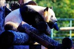 走进北京动物园,寻找儿时的踪迹
