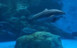 【珠海横琴长隆国际海洋度假区图片】珠海长隆海洋王国