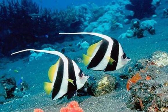 鼓浪屿海底世界