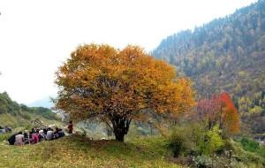 【茂县图片】赏红叶,相约松坪沟