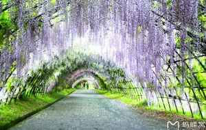 【福冈图片】186作死之体验死亡之旅,日本九州